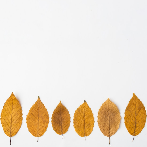 Linea di foglie autunnali Foto Gratuite