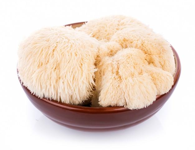 Lion mane mushroom isolated on white background Premium Photo