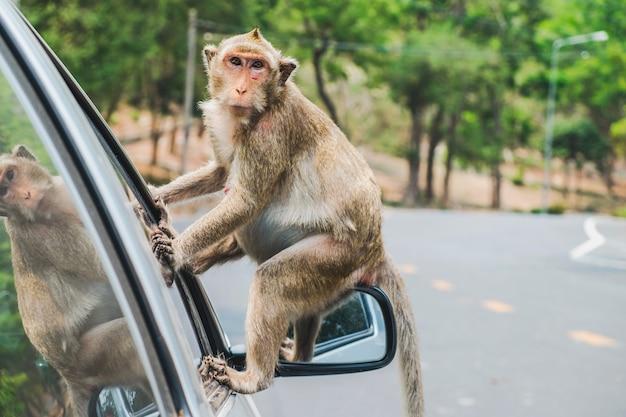 Litte crab-eating macaque Premium Photo