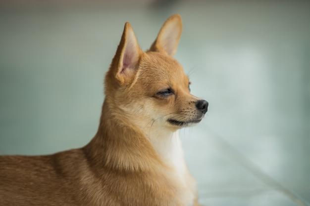 Litte dog waiting owner and look around Premium Photo