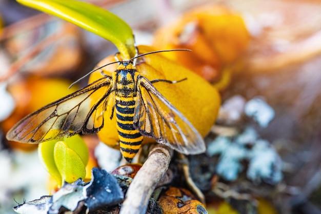 Маленькая пчела на желтом цветке дикой орхидеи Premium Фотографии