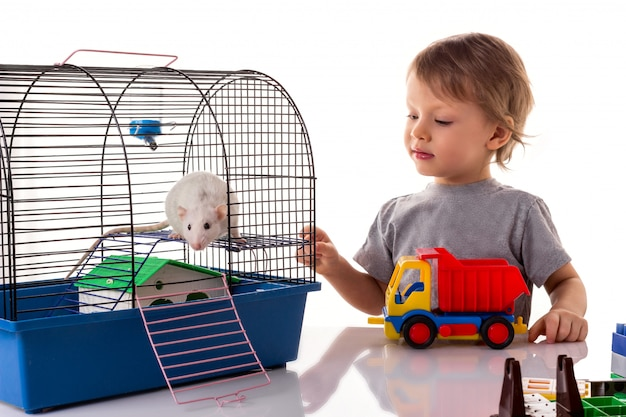 Little boy playing with a white rat pet Premium Photo