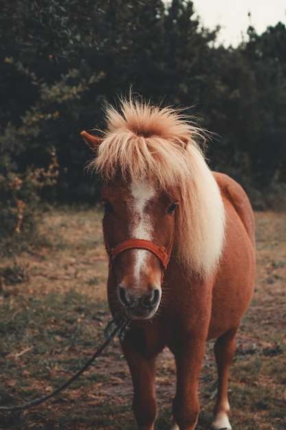 Little brown pony Premium Photo