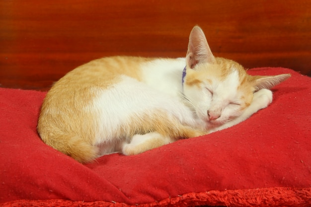 Little cat (kitten) have yellow and white fur sleep on red pillow on wood background Premium Photo