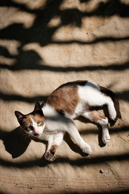 Little cat relaxing outdoors concept Free Photo