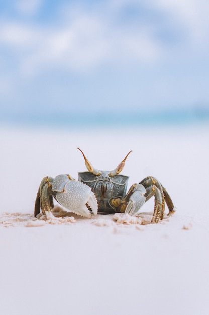 Little cute crab at the beach by the ocean Free Photo