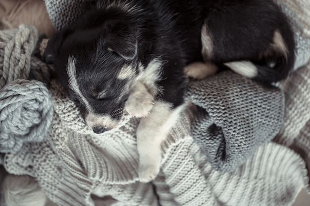 セーターで横になっている小さなかわいい子犬 無料写真