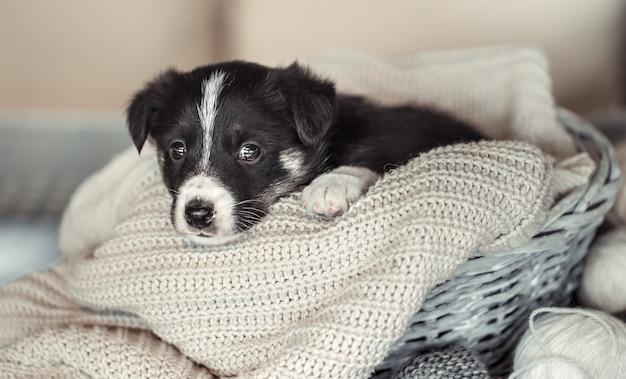 Piccolo cucciolo carino sdraiato con un maglione. Foto Gratuite