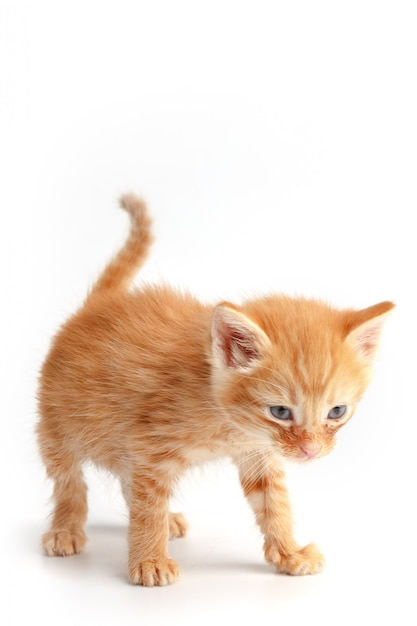 Little cute red kitten with blue eyes Premium Photo