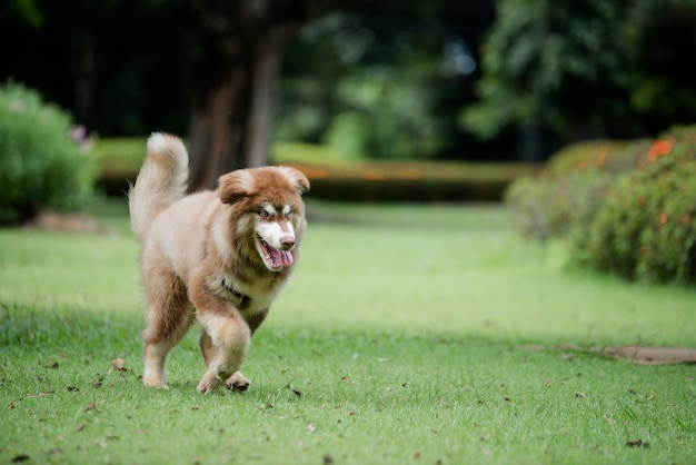 Little dog in a park outdoors. lifestyle portrait. Free Photo