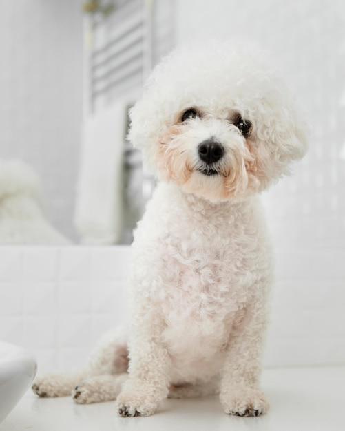 Piccolo cane seduto in bagno Foto Gratuite