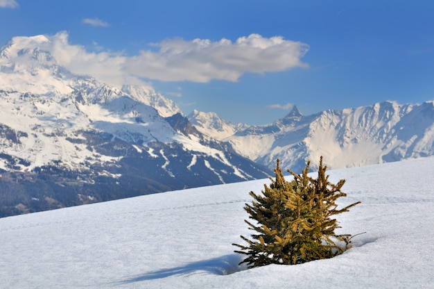 Little fir in the snow Premium Photo