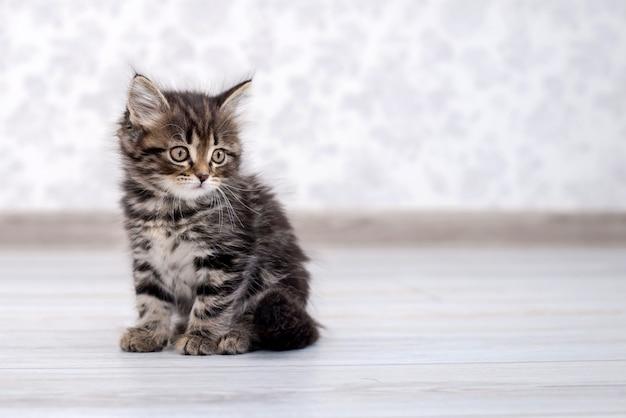 Little funny kitten on the floor Premium Photo