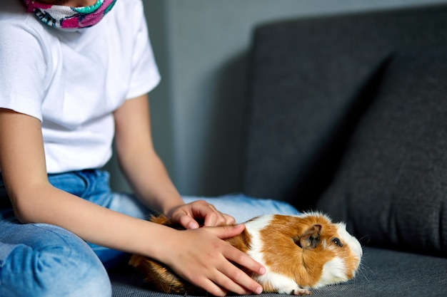 Little girl in mask playing with red guinea pig, cavy at home at sofa while in quarantine. Premium Photo