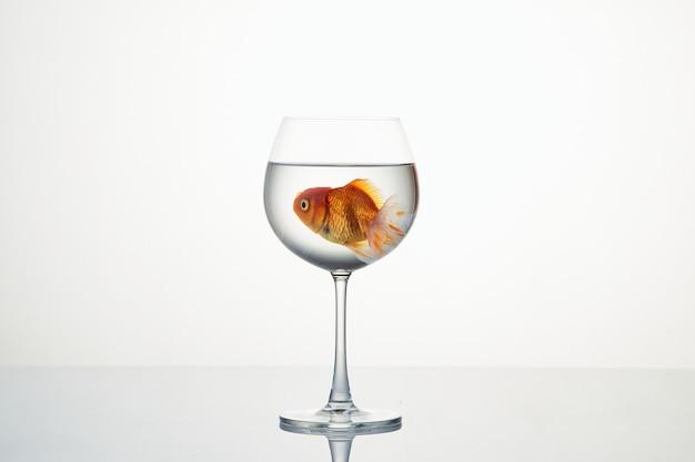 水のワイングラスで動く小さな金魚 Premium写真