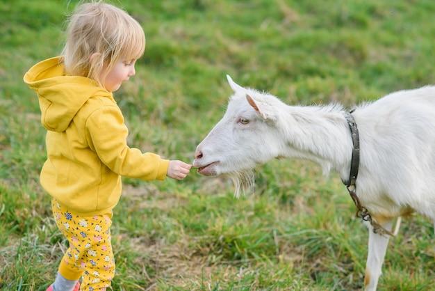 牧草地でヤギを草で食べて黄色の服で幸せな少女。 Premium写真