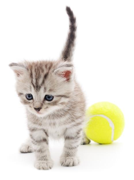 Маленький котенок играет с мячом Premium Фотографии