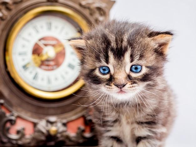 時計の近くに青い目をした子猫。新しい一日の始まり Premium写真