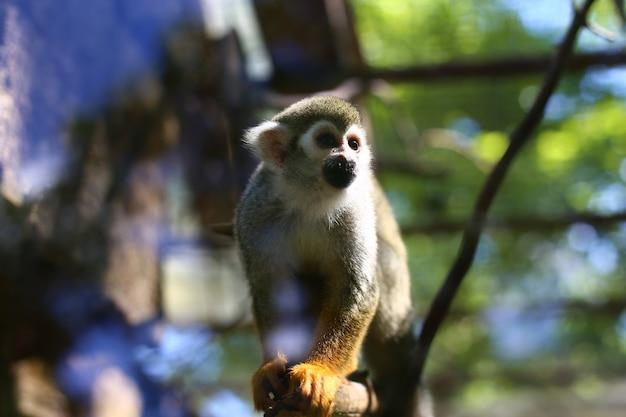Little monkey sitting on a branch Premium Photo