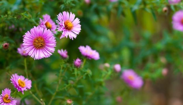 濃い緑色の背景に小さなピンクの花 Premium写真