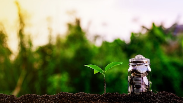 Little plants is growing up and coins in the garden. - concept of investment property. Premium Photo