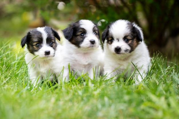 Маленькие щенки на траве Premium Фотографии