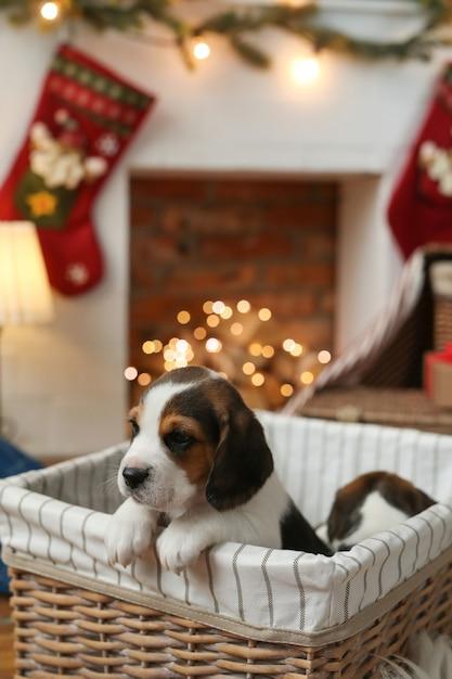 小さな子犬 無料写真