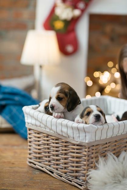 Piccolo cucciolo nel cestino Foto Gratuite