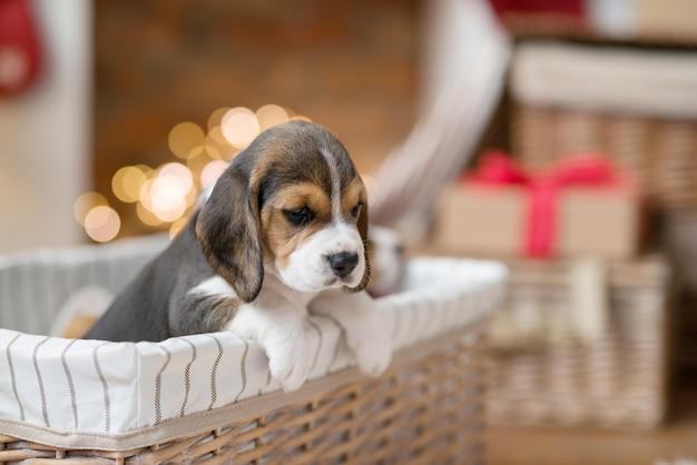 Маленький щенок в корзине Бесплатные Фотографии