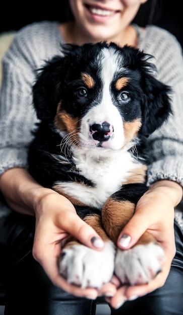 素敵なマニキュア、ファッションでファッショナブルな女の子の手にバーニーズ・マウンテン・ドッグの子犬 Premium写真