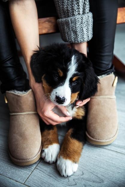 좋은 매니큐어와 유행 소녀의 Hs에 Bernese 산 강아지의 작은 강아지. 동물 프리미엄 사진