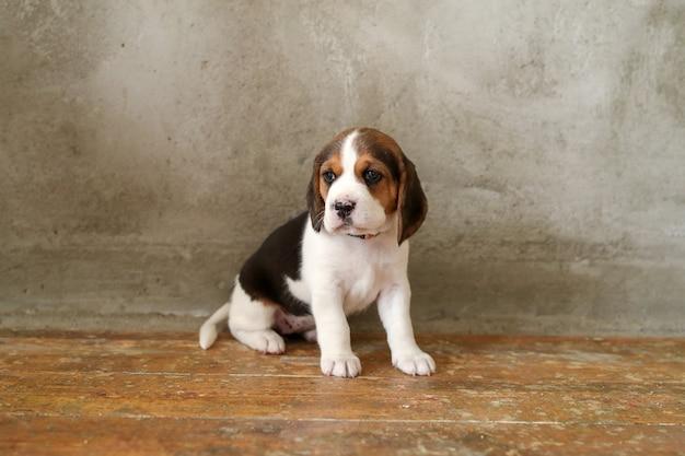 Piccolo cucciolo sul pavimento di legno Foto Gratuite