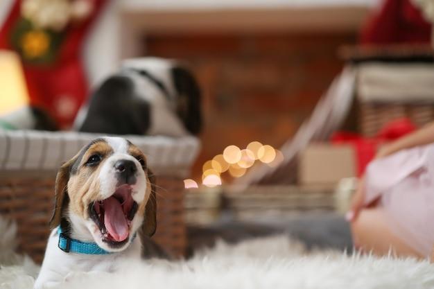 あくびをする小さな子犬 無料写真