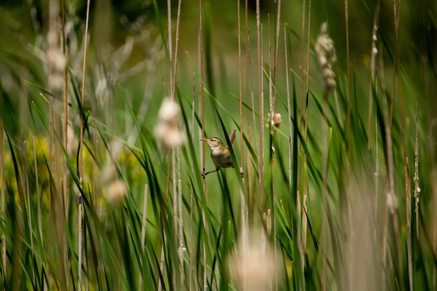 Il piccolo passero si è appollaiato sulle piante verdi con due gambe sopra sulle piante separate Foto Gratuite