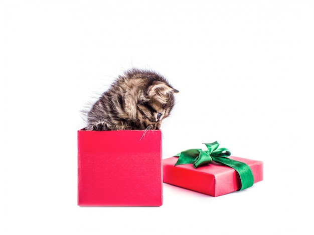 Little tabby kitten in a red gift box with a bow Premium Photo