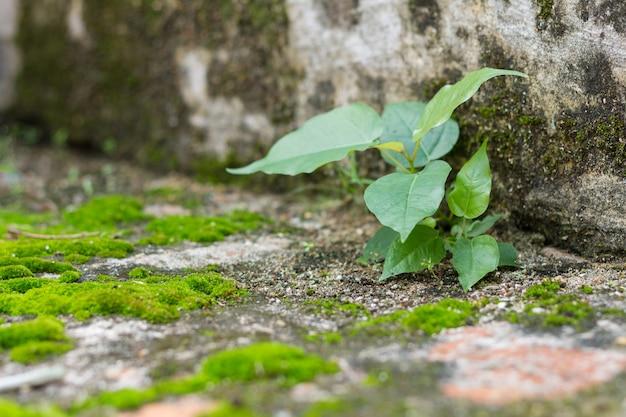 Little tree and moss green ferns on brick wall Premium Photo