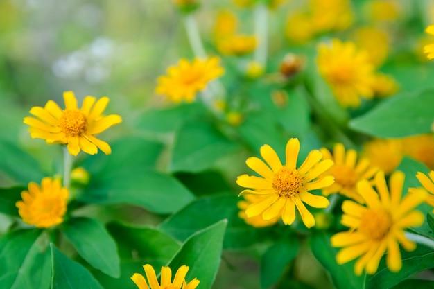 Little yellow star flower photo premium download little yellow star flower premium photo mightylinksfo