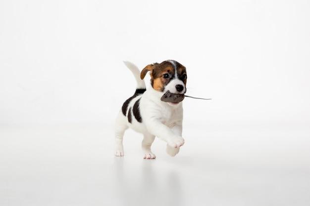 Cachorro engasgado
