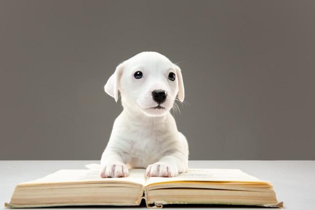 쾌활 한 포즈 작은 어린 강아지. 무료 사진