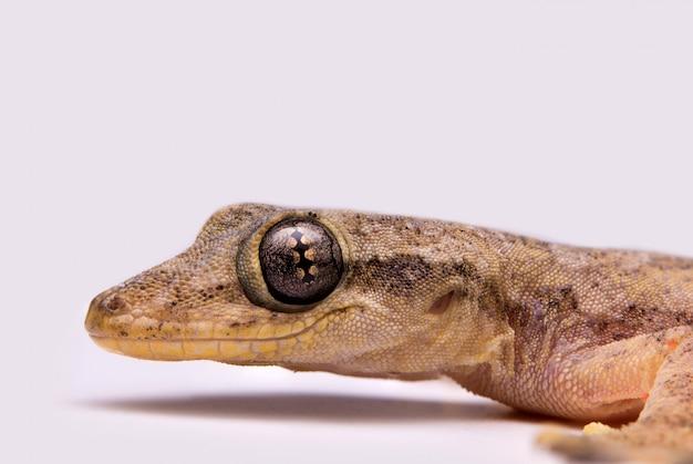 Lizard Free Photo