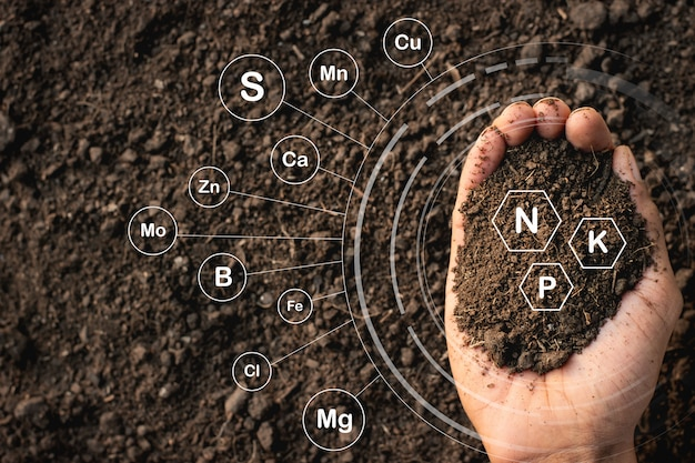 Loamy soil that is rich in man's hands and has iconic ...