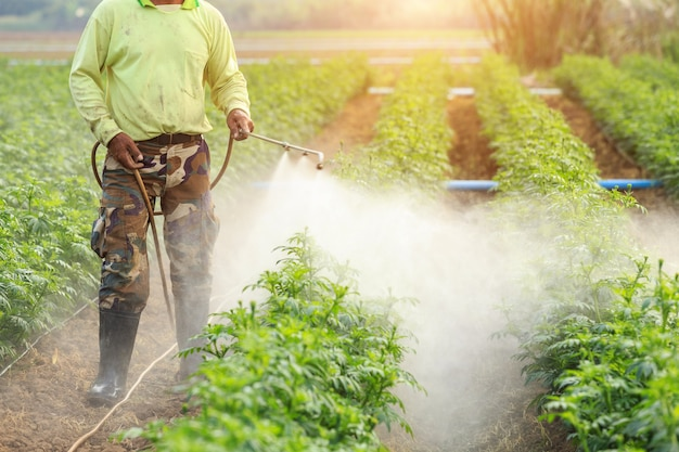 Local thai farmer or gardener spraying chemical Premium Photo