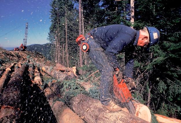 Logger sawing logs, idaho Premium Photo