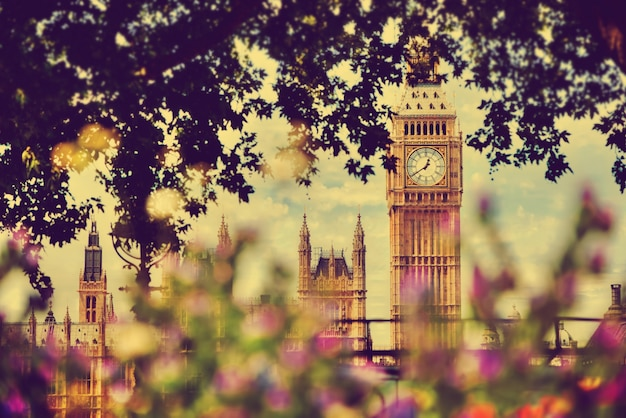 London view through a tree Free Photo