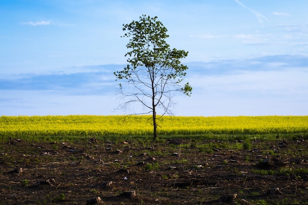 A lone tree after the felling Premium Photo