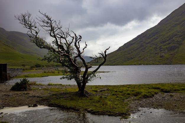 Solitario albero spazzate dal vento a doo lough, nella contea di mayo, repubblica di irlanda Foto Gratuite