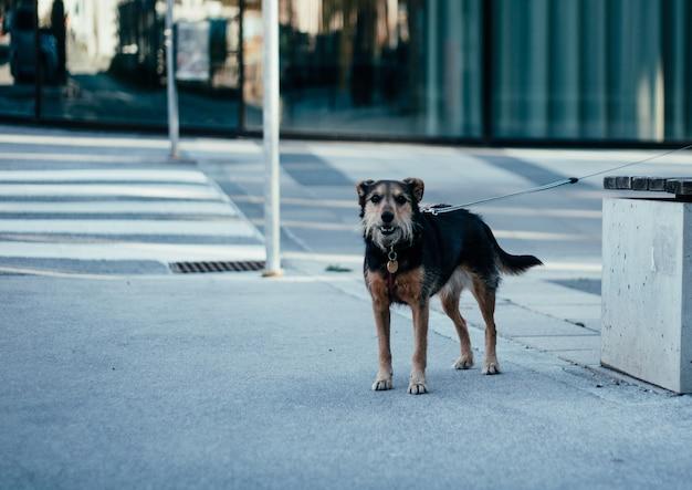 昼間にベンチの隣に立っている孤独な黒と茶色の野犬 無料写真