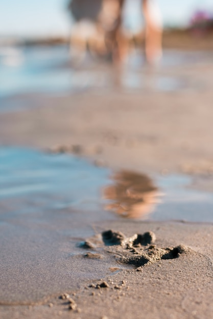 Lonely dog paw footprints printed in the sand on the beach Premium Photo