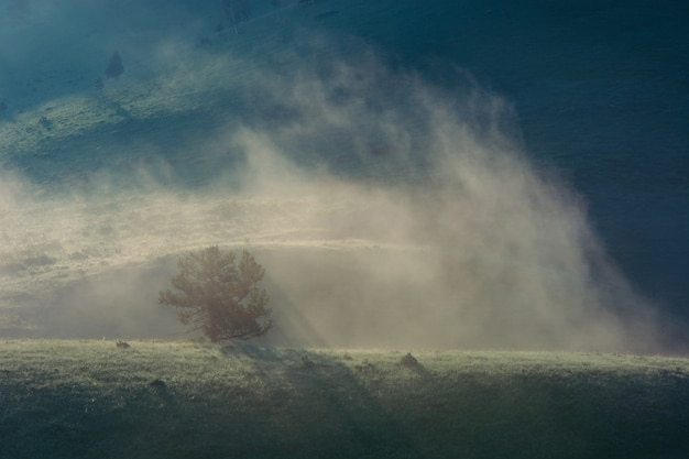 Lonely fir in the misty morning mountains. hill. fog. dawn. blue landscape. Premium Photo