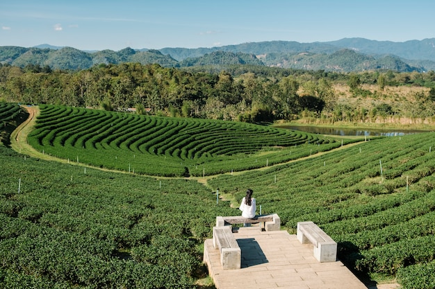 Lonely girl in tea farm field Free Photo